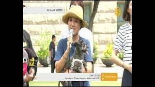 Пес южнокорейского президента стал лицом кампании против употребления в пищу собак