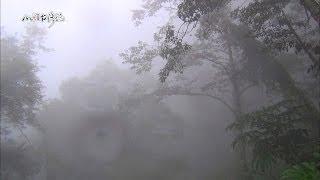 20140526【623】MIT台灣誌 停格在傳說中的一條山徑 埤亞南古道踏勘