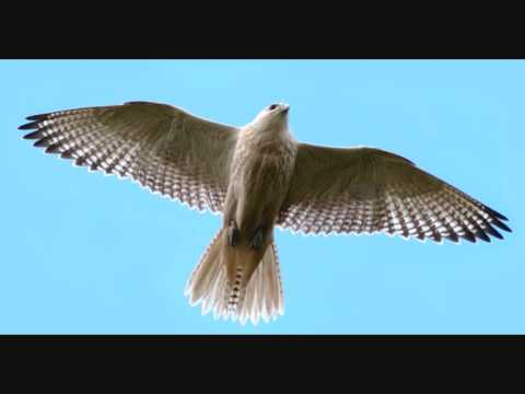 Richard and Mimi Farina  - Falcon