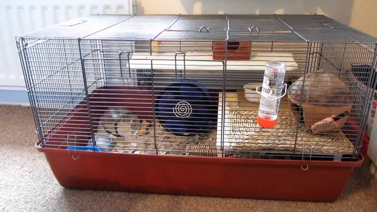 hamster cage tour peanuts alaska cage youtube. Black Bedroom Furniture Sets. Home Design Ideas
