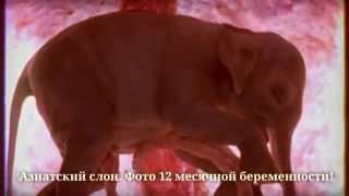 Животные в утробе! Интересные снимки зародышей животных