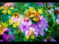 CREATIVE FLOWER PHOTOGRAPHY - In-Camera Multiple Exposure Flowers