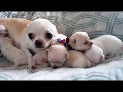 Busy Momma - Resting with her sweet pups