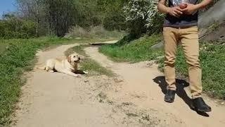 하남 강아지 훈련사 애견 강아지훈련소 비용 알아볼까요 …