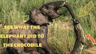 stunning elephant vs crocodile fights