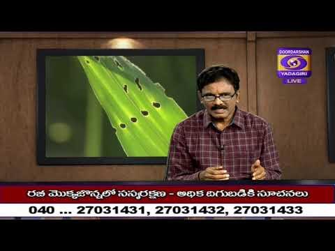 Raithu Nestham  Dt: 04-12-2019
