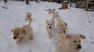 pet 2018 cute dog babies  if this babies cant melt your heart nothing can   so cute