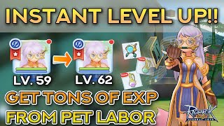RAGNAROK INSTANT LEVEL UP!! Get EXP From Pet Labor | Ragnarok Mobile Eternal Love