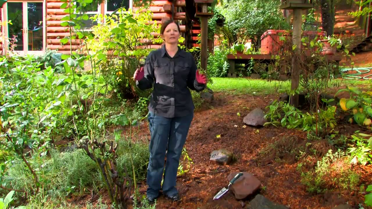 Steps in Planting a Garden YouTube – Steps to Planting a Garden