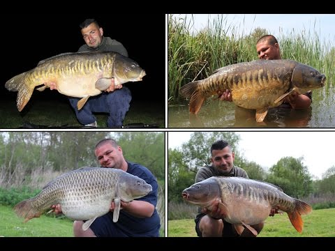 Carp Fishing Cottington Lakes 2016 (Including 14 Fish Over 30lbs To 41lbs)
