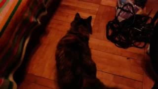 Кошка и точка.