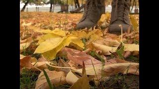 Осенняя хандра: как избавиться от депрессии