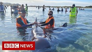 Rescuers save whales from notorious stranding spot - BBC News