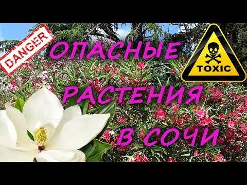 Внимание! Опасные растения в Сочи