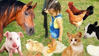 BRINCANDO COM OS ANIMAIS DA FAZENDA   SONS DOS ANIMAIS   BRINCANDO COM BIA E HENRY