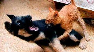 Кошки и собаки  видео приколы: смотреть приколы про кошек и собак!