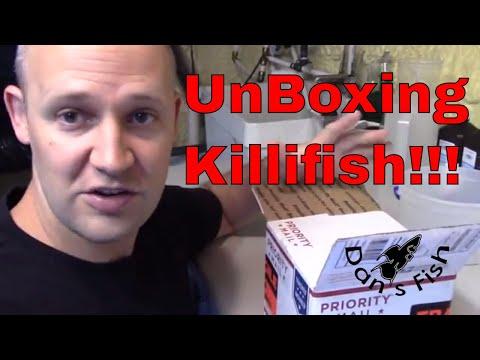 Killifish Unboxing!!! Aphyosemion Striatum