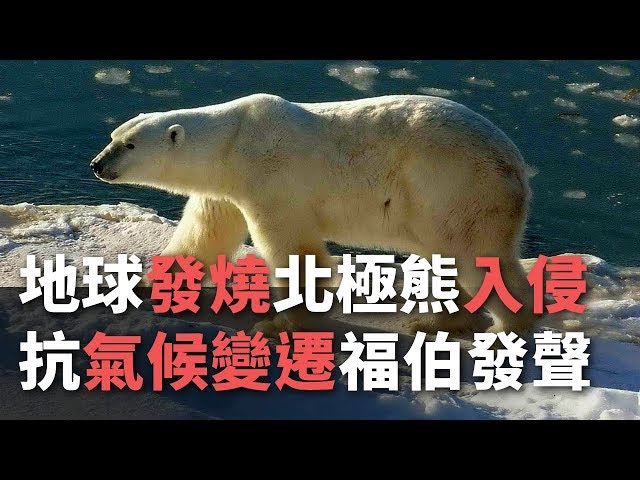 地球發燒北極熊入侵 抗氣候變遷福伯發聲【央廣國際新聞】