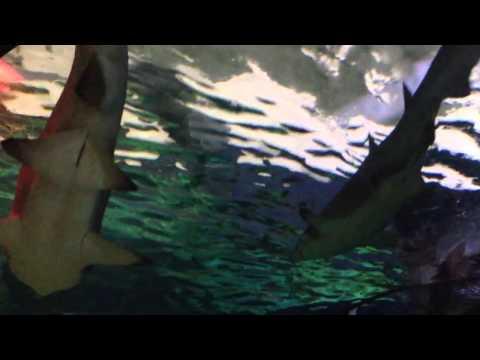 France Aquarium, sharks