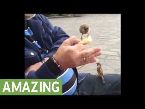 Guy hand-feeds wild sparrows at park