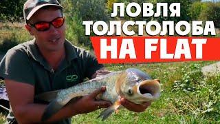 Ловля толстолоба на FLAT фидер! Секреты флэт фидерной рыбалки!