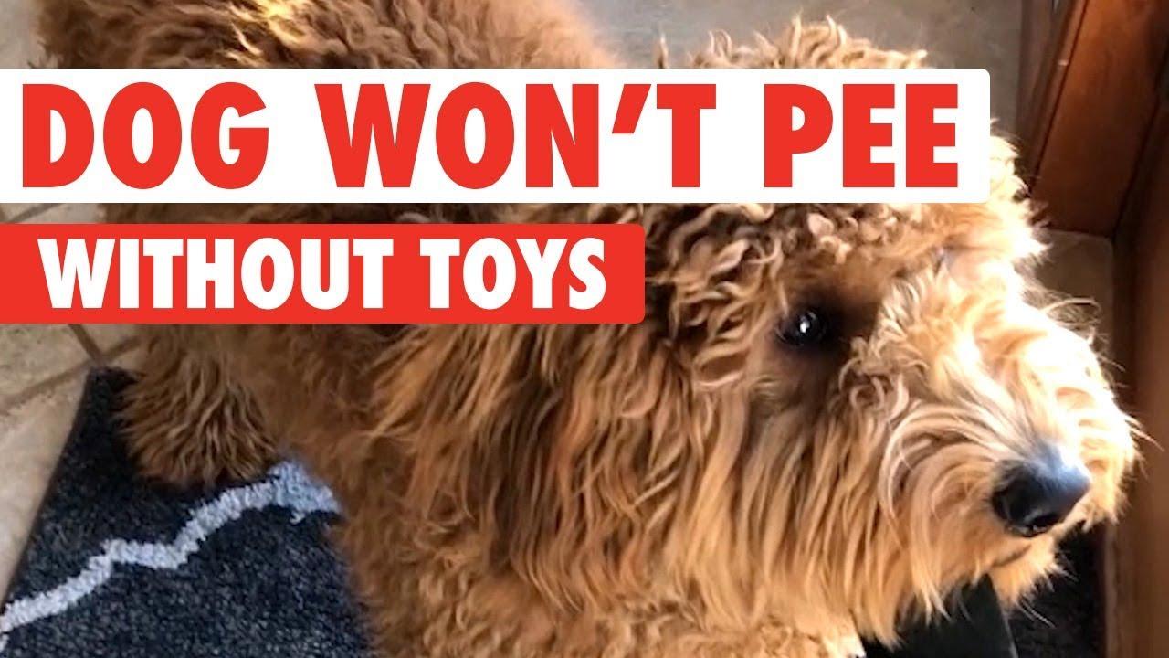 Make Dog Pee Outside