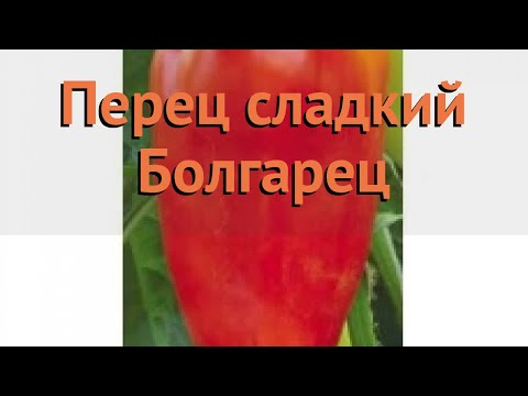 Перец сладкий Болгарец (bolgarets bolgarets) 🌿 Болгарец обзор: как сажать, семена перца Болгарец