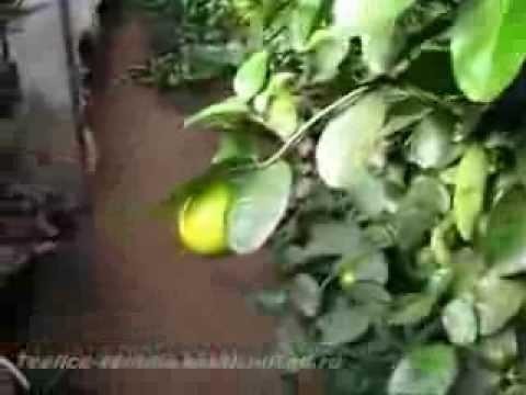Секреты выращивания экзотических растений в Украине - Утро с .
