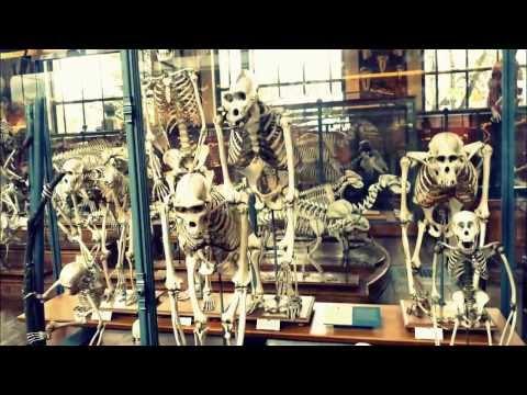 visite du Muséum national d'Histoire naturelle en famille Paris MNHN