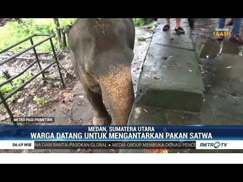 Donasi untuk Satwa di Kebun Binatang Medan Mencapai Rp105 Juta