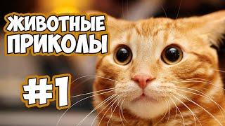 Pets world и приколы смешные с котами кошками про котов про животных 2019 funny cats animals