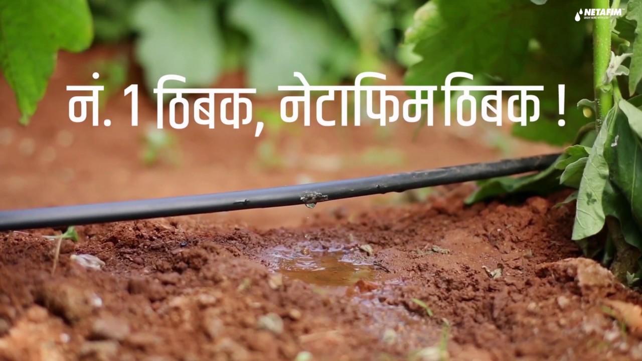 Benefits of Drip Irrigation   Netafim