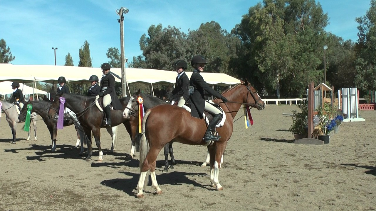 2016 Fall Festival Childrens Pony Hunter Derby ...