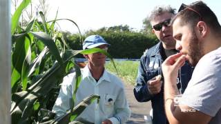 OPEN FIELD DAY 2016 - O DIA DE CAMPO DA AGRISTAR DO BRASIL