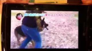 ピラメキドッグ四号 認定!