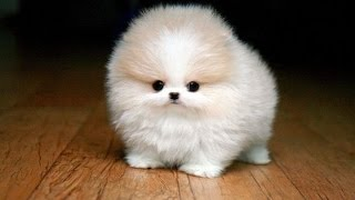 Милые детёныши животных - beautiful baby animals cмотреть видео онлайн бесплатно в высоком качестве - HDVIDEO