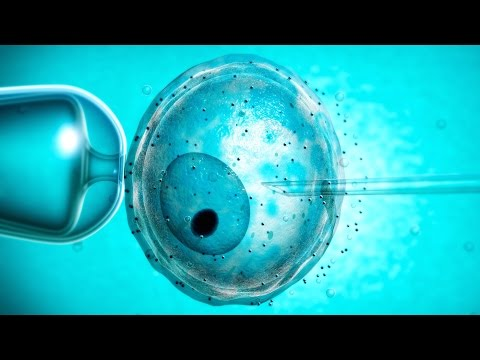 UK Scientists Move Forward With Genetically Modified Human Embryos