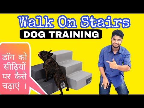 train-your-dog-how-to-walk-on-stairs-|-डॉग-को-सीढ़ियों-पर-कैसे-चढ़ाएं-।-|-dog-ko-training-kaise-dein