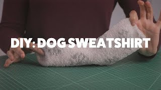 DIY Dog Sweatshirt | #DIYWednesday | Rover.com