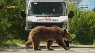 видео 2. Реклама