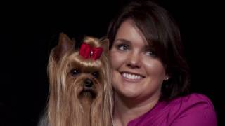 Daily Care For Coat Maintenance Of Yorkshire Terriers