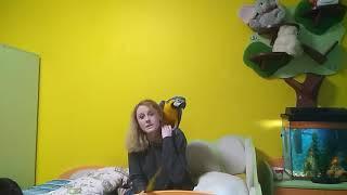 Уход за попугаем: содержание большого попугая серия 7