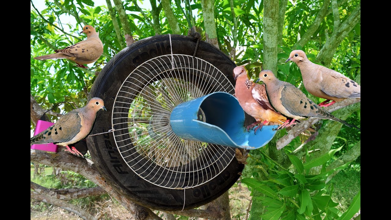 Awesome Quick Bird Trap Using Car Tire And Electric Fan Guard Best Water Pipe