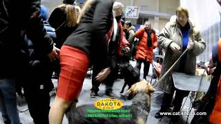 1 часть, Выставка собак, Локомотив, Харьков, КСУ, Природа, 26 27 01 2019