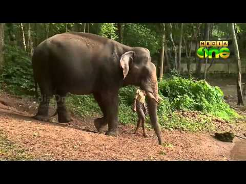 Morning Walk to Kottoor ecotourism destination, Thiruvananthapuram 11 07 15