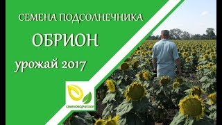 Семена подсолнечника Обрион Урожай 2017 года!(, 2017-10-03T11:09:18.000Z)