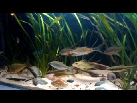 UK Native Fish Tank 2