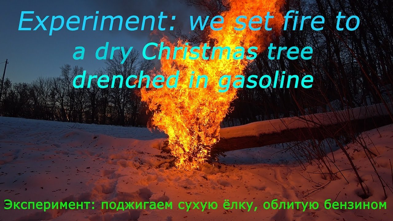 Experiment: we set fire to a dry Christmas tree drenched ...