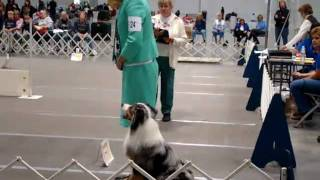 Virginia Beach Dog Show 2010 - Rally Competition - Expert Ii