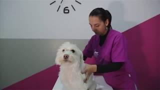 La espalda cadera dolor perros en de en